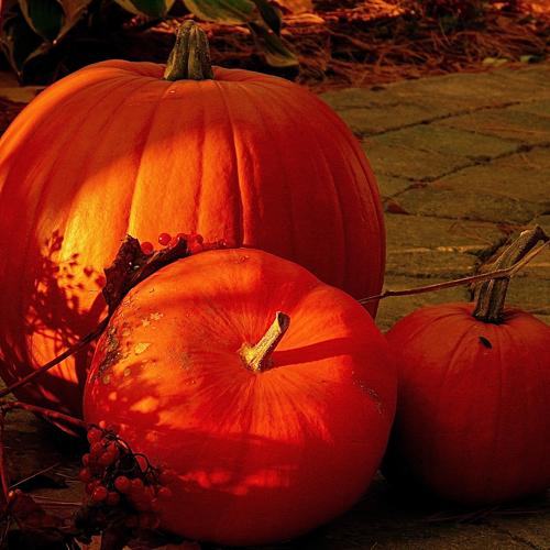 10 mete per un Halloween da paura!